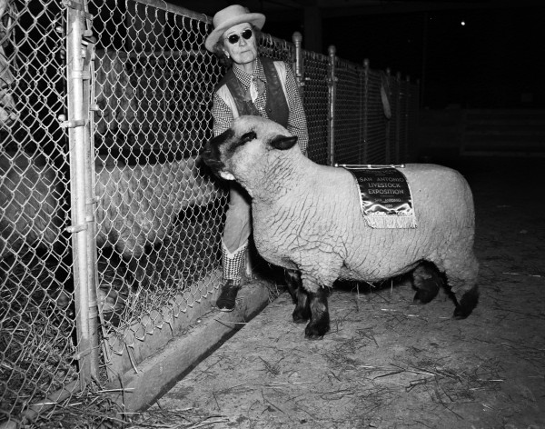 Ammie E. Wilson, from Plano, with champion Hampshire ewe.  (MS 359:  L-3914-A)