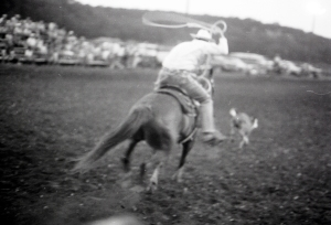 Shari Powell intern files, Crider, Texas rodeo, 1984