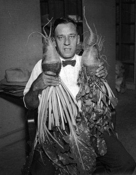 Ed Lorenzon holds two large beets grown in his back yard on Wharton Street, May 1934.  (MS 359: L-0329-C)