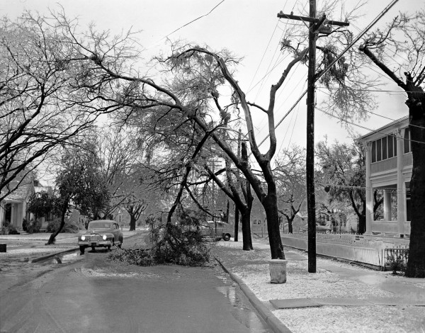 Tree damaged by ice, 1951. (San Antonio Light Collection, MS 359: L-4077-D)
