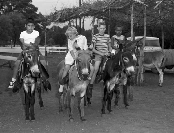 Donkey ride, Brackenridge Park, 1966.  (MS 355: Z-1831-8)