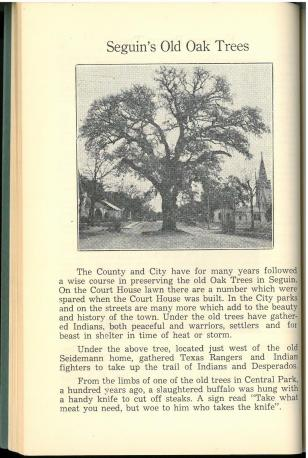 """Seguin's Old Oak Trees"" In An Authentic History of Guadalupe County (1951) by Willie Mae Weinert. UTSA Libraries Special Collections."