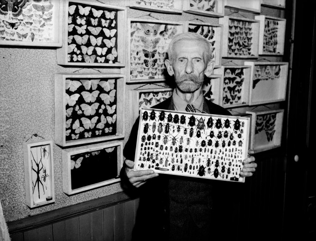 Charles O. Neumann, photographer and avocational entomologist, stands with cases of insects that he began collecting at age ten, December 1936.  (MS 359:  L-1521-B)