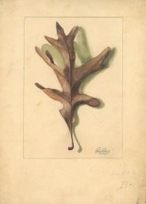 Cropped Leaf