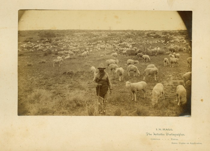 Shepherd with flock on William Negley's Las Farias Ranch, Maverick County, 1880s. Photograph by Ichabod Nelson Hall, Canadian-born itinerant photographer based in Cotulla. (General Photograph Collection, MS 362: 102-0803)