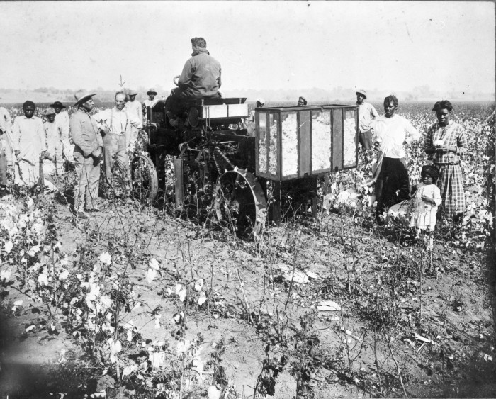 During a demonstration of his invention, B. Johnson discusses his mechanical cotton picker on a farm in Wharton County. (081-0072. Courtesy of Eve Bartlett and Wharton County Historical Museum)